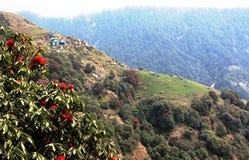 Montagna di Triund. L'Himalaya. L'India immagine stock
