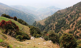 Montagna di Triund. L'Himalaya. L'India fotografie stock