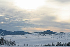 Montagna di Zlatibor Fotografia Stock