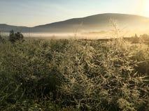 Montagna dorata in rugiada di primo mattino Fotografia Stock Libera da Diritti