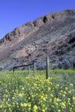 Montagna e campo Immagine Stock