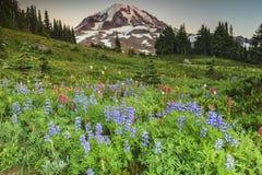 Montagna e fiori Fotografie Stock