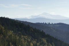Montagna e foresta fotografia stock libera da diritti