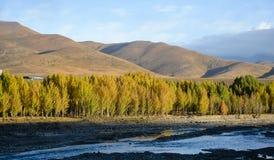 Montagna e foresta del fiume in autunno immagine stock libera da diritti