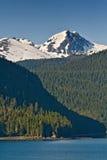Montagna e foresta dell'Alaska Fotografia Stock Libera da Diritti