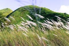 Montagna e l'erba Fotografia Stock Libera da Diritti