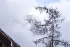 Montagna e un vecchio albero Fotografia Stock Libera da Diritti