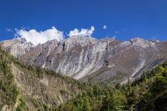 Montagna e valle curve sconosciute in pieno dei pini Immagini Stock
