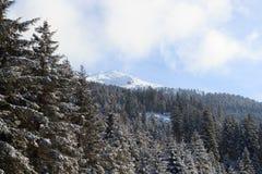 Montagna ed alberi con neve nell'inverno nelle alpi di Stubai Fotografia Stock