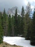Montagna ed alberi a Misurina Fotografia Stock Libera da Diritti