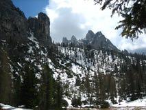Montagna ed alberi a Misurina Fotografia Stock