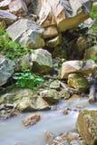 Montagna Forest Creek Immagine Stock Libera da Diritti