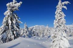 Montagna in foresta Immagine Stock Libera da Diritti