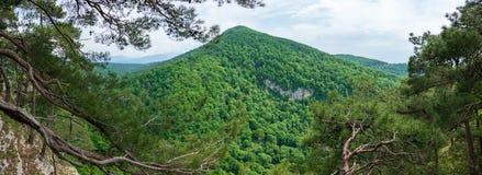 Montagna invasa con la foresta verde spessa con gli edifici residenziali su uno dei pendii immagine stock libera da diritti