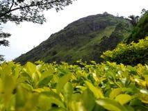 Montagna naturale con erba fotografia stock
