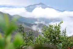 Montagna naturale del tè fotografia stock libera da diritti