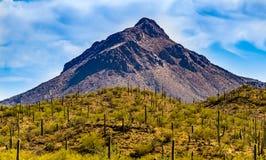 Montagna nel deserto di Tucson Arizona Fotografia Stock