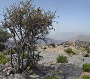 Montagna nell'Oman Immagini Stock Libere da Diritti
