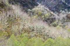 Montagna O Courel a Lugo, Galizia Spagna Immagine Stock Libera da Diritti