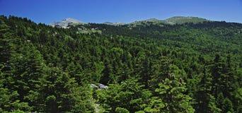 Montagna panoramica con la foresta degli alberi di pino Fotografie Stock Libere da Diritti