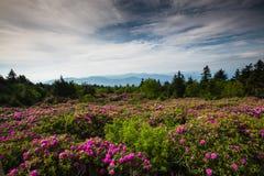 Montagna Roan Tennessee di cielo del rododendro Fotografie Stock Libere da Diritti