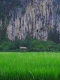 Montagna rurale della risaia di vista Fotografia Stock Libera da Diritti