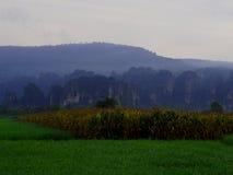 Montagna rurale della risaia di vista del paesaggio Immagini Stock Libere da Diritti