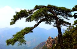 Montagna sanqing della collina della provincia della Cina jiangxi Fotografie Stock Libere da Diritti