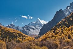 Montagna santa di Chana Dorje nell'abetaia di autunno a Shangri-La immagine stock libera da diritti