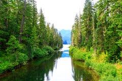 Montagna scenica Green River con acqua trasparente Fotografia Stock