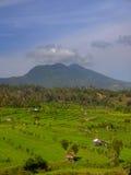 Montagna sopra i campi agricoli asiatici sudorientali Fotografia Stock Libera da Diritti