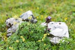 Montagna stante latente in Austria Fotografia Stock Libera da Diritti