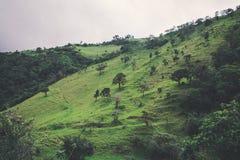 Montagna verde Fotografie Stock Libere da Diritti