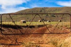 Montagna verde del portone delle balle dell'azienda agricola Fotografia Stock