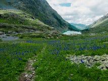 Montagna zero sul Altai Fotografie Stock