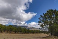 Montagne, alberi, pietra e cielo fotografia stock libera da diritti