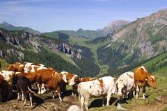 Montagne alpine di estate Immagine Stock Libera da Diritti