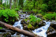 Montagne Altai, cascade photos stock
