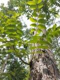 Montagne après l'arbre Photo stock