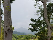 Montagne après l'arbre Photos stock