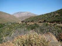 Montagne aride del sud di California Fotografie Stock