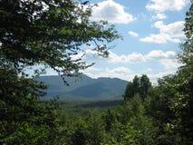Montagne attraverso la foresta Fotografia Stock