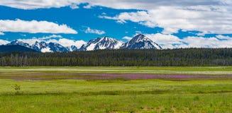 Montagne avec les wildflowers pourpres images libres de droits