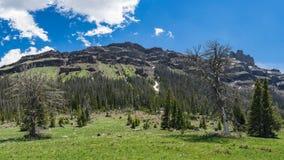 Montagne boscose del Wyoming Fotografia Stock Libera da Diritti