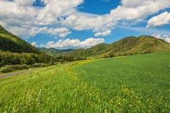 Montagne, campi, prati, cielo, fondo Immagine Stock