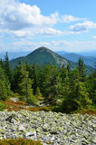 Montagne carpatiche di estate. Fotografie Stock Libere da Diritti