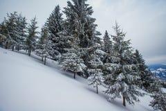 Montagne carpatiche di inverno fotografia stock