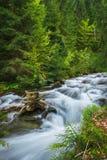 Montagne carpatiche Il fiume della montagna vicino alla cascata Shipot Immagine Stock