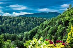 Montagne carpatiche maestose coperte di conifere fotografia stock