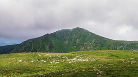 Montagne carpatiche pittoresche e drammatiche sotto le nuvole di pioggia enormi, paesaggio di estate, Ucraina della natura Immagine Stock